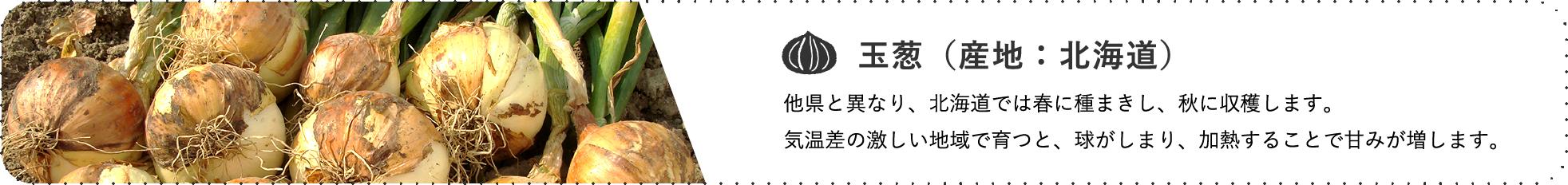 玉葱(産地:北海道) / 他県と異なり、北海道では春に種まきし、秋に収穫します。気温差の激しい地域で育つと、球がしまり、加熱することで甘みが増します。