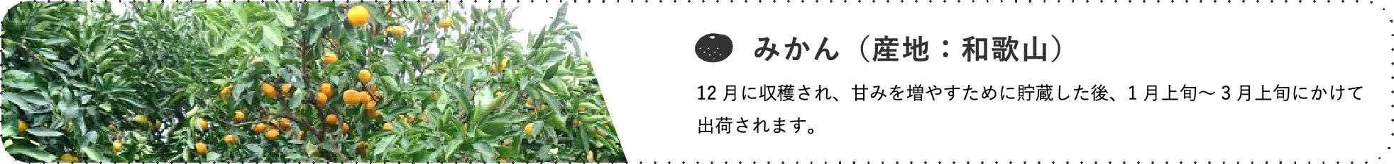 みかん(産地:岐阜) / 12月に収穫され、甘みを増やすために貯蔵した後、1月上旬~3月上旬にかけて出荷されます。