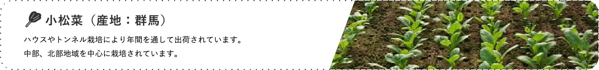 小松菜(産地:群馬) / ハウスやトンネル栽培により年間を通して出荷されています。 中部、北部地域を中心に栽培されています。