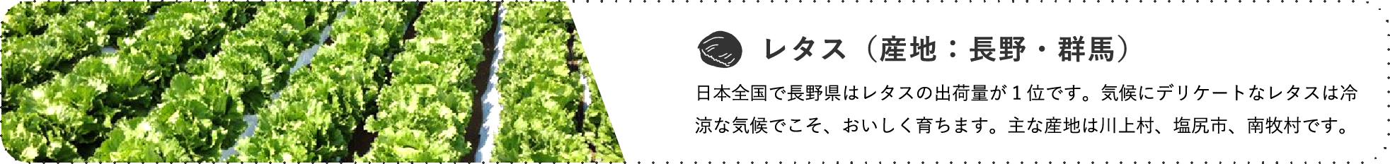 レタス(産地:長野・群馬) / 日本全国で長野県はレタスの出荷量が1位です。気候にデリケートなレタスは冷涼な気候でこそ、おいしく育ちます。主な産地は川上村、塩尻市、南牧村です。
